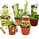 Exotenherz - Starter Set Fleischfressende Pflanzen - 5 Pflanzen