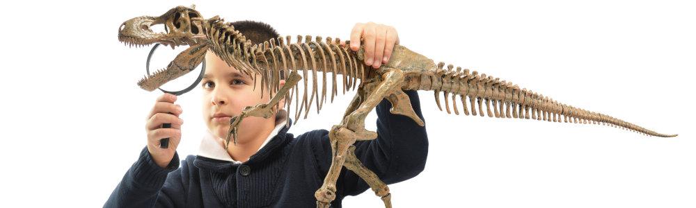 Dinosaurier Kosmos Kasten Experimente